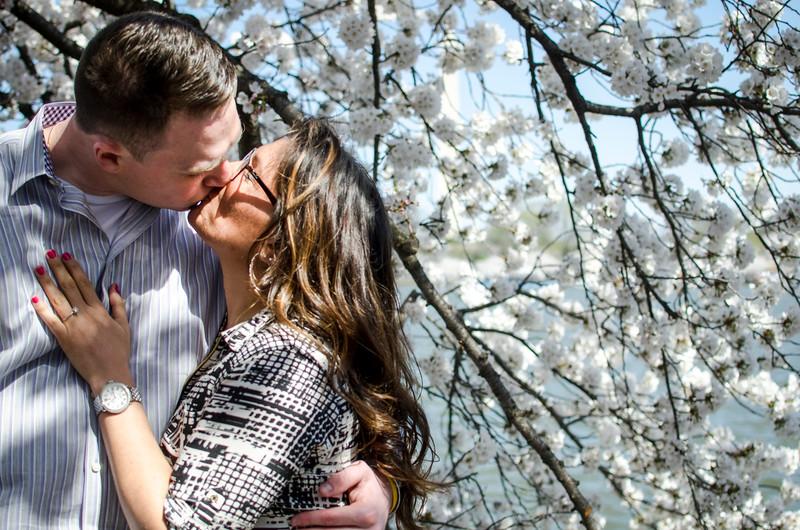 DC Cherry Blossom Proposal